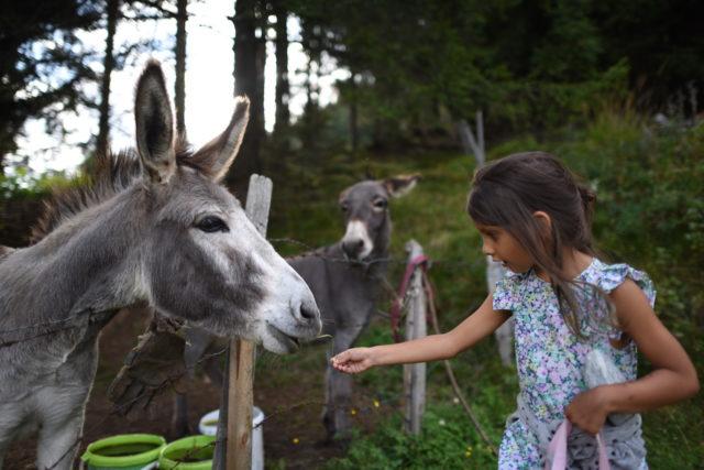 Das Almdorf Eselspaar@Das Almdorf World Peace Eco Resort