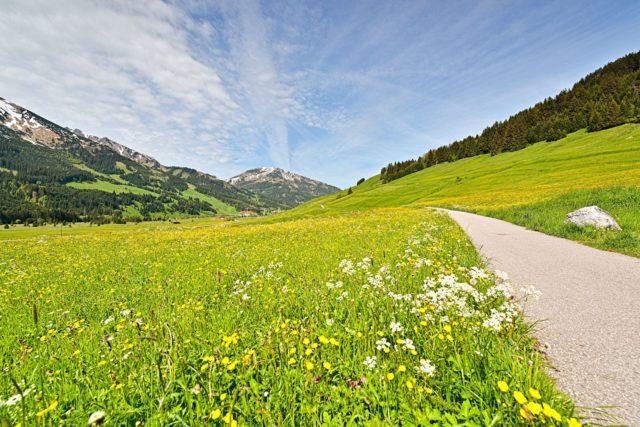Wanderwege Durch Die Gruenen Wiesen Hotel Bergblick